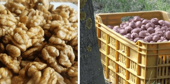 Ako uchovať orechy pokojne aj 10 rokov s nezmenenou chuťou. Nezatuchnú a ani neplesnivejú!