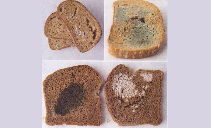 Smutná pravda o Slovenskom chlebe, ktorý ste si kúpili. Enzýmy, éčka a rýchla skaza